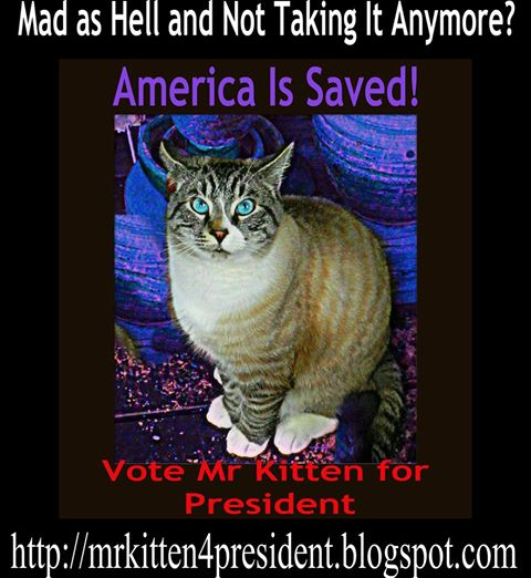 Mr Kitten Is Running For President.  Yes A Cat is Running For President as A Write In Candidate.
